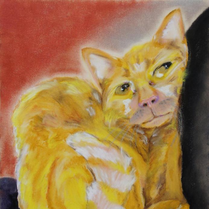Zurich Cat